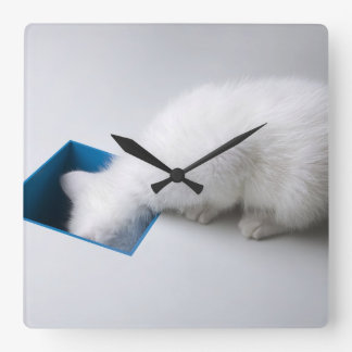 A Young Kitten Stretches His Head Down a Square Square Wall Clock