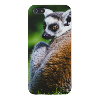 A Young Lemur, Animal Photography Cases For iPhone 5