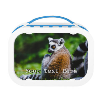 A Young Lemur, Animal Photography Lunch Box