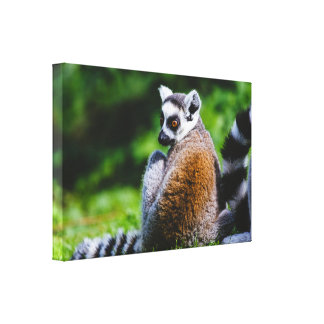 A Young Lemur On A Green Background, Animal Photo Gallery Wrap Canvas