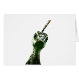 A young peacock's head peering over to say hi! stationery note card