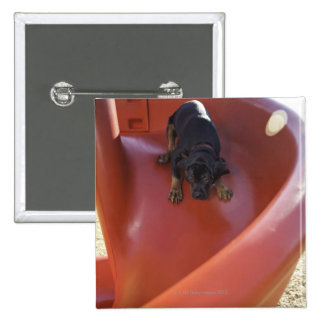 a young puppy sliding down a slide button