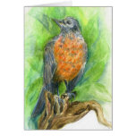 A Young Robin, Watercolor Pencil Greeting Cards