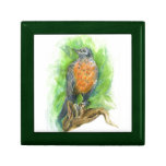A Young Robin, Watercolor Pencil Jewelry Box