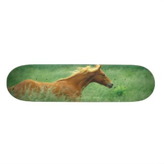 A young stallion runs through a meadow of tall skateboard deck