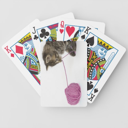 A young tabby kitten playing bicycle playing cards