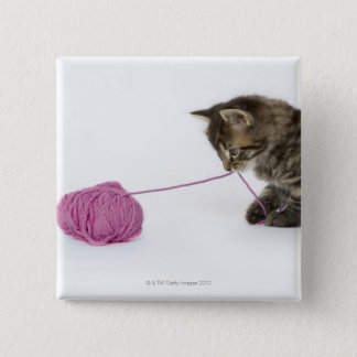 A young tabby kitten playing pinback button