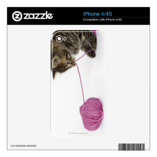 A young tabby kitten playing skins for iPhone 4S