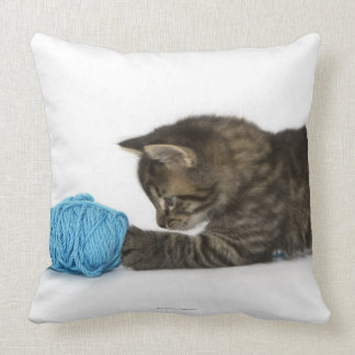 A young Tabby kitten playing with wool Pillow