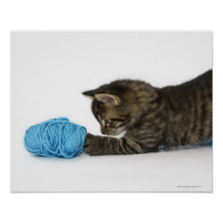 A young Tabby kitten playing with wool Poster