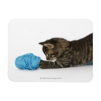 A young Tabby kitten playing with wool. Rectangle Magnet