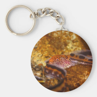 A young Wolf EEL Basic Round Button Keychain