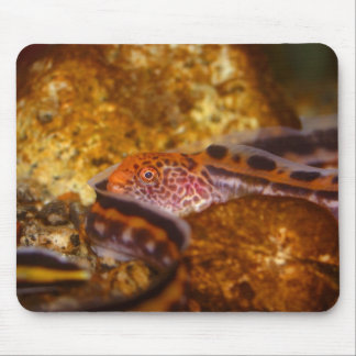A young Wolf EEL Mouse Pad
