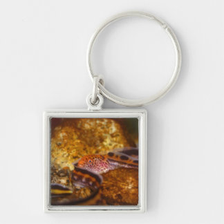 A young Wolf EEL Silver-Colored Square Keychain