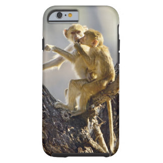 A young Yellow baboon  (Papio cynocephalus) Tough iPhone 6 Case