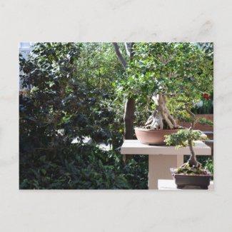 A Zen Garden Post Cards