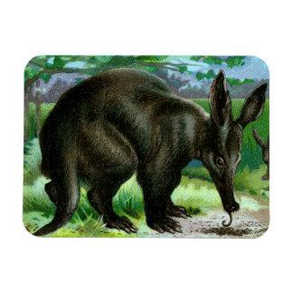 Aardvark que come hormigas imanes de vinilo