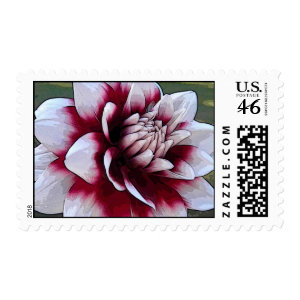 AB- Red and White Dahlia postage stamp