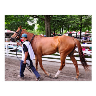 Abaco - Phipps Stables Postcard