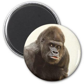 Abadejo del gorila imán de nevera
