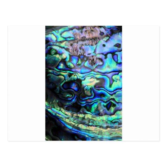 Abalone paua shell postcard