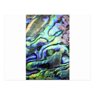 Abalone shell green blue paua postcard