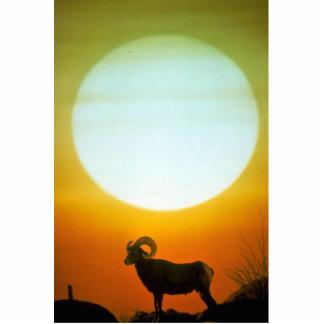 Abandone las ovejas de carnero con grandes cuernos fotoescultura vertical