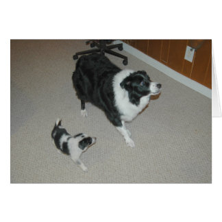 Abby & Ava~Amazing & Awesome Border Collies Greeting Card