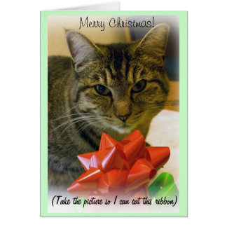 Abby Cat with Ribbons Christmas Card