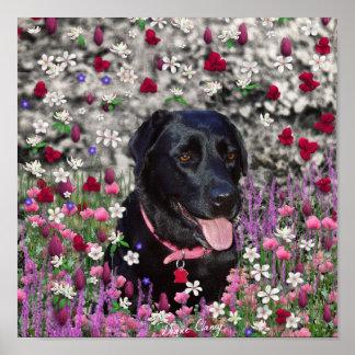 Abby en flores - perro negro del laboratorio poster