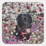 Abby en flores - perro negro del laboratorio colcomanias cuadradas personalizadas