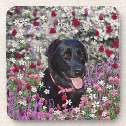 Abby en flores - perro negro del laboratorio posavasos de bebidas