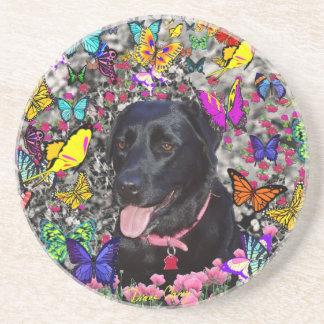 Abby en mariposas - perro negro del laboratorio posavasos para bebidas