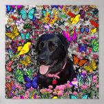 Abby en mariposas - perro negro del laboratorio póster
