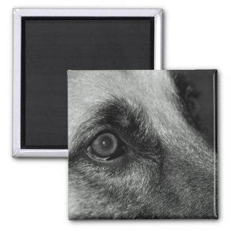 Abby German Shepherd Watchful Eye Magnet