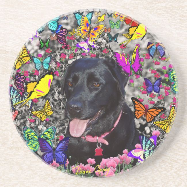 Abby in Butterflies - Black Lab Dog Drink Coaster