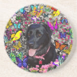 Abby in Butterflies - Black Lab Dog Drink Coasters