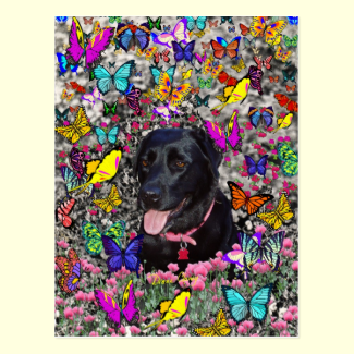 Abby in Butterflies - Black Lab Dog Post Cards