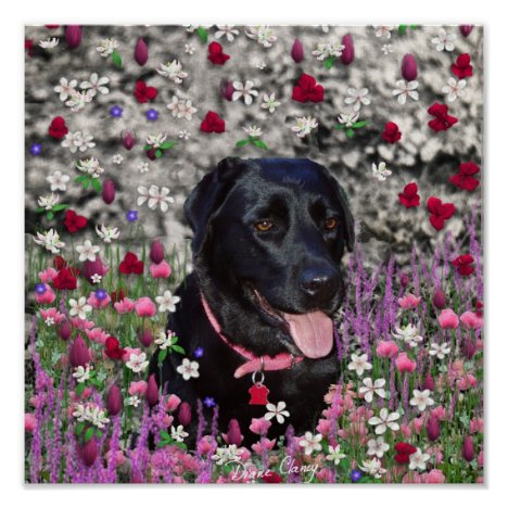 Abby in Flowers – Black Lab Dog Poster
