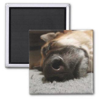 Abby Sleeping German Shepherd Magnet