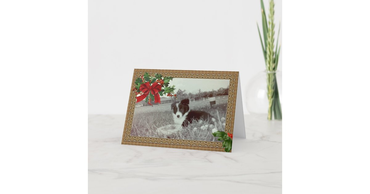Abby the Awesome Border Collie~Christmas Card | Zazzle.com
