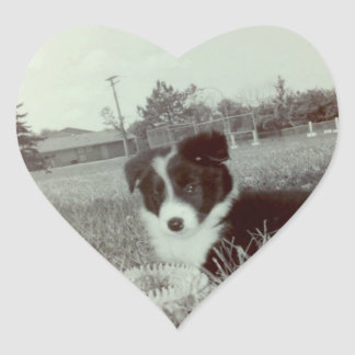 Abby The Awesome Border Collie~Sticker Heart Sticker