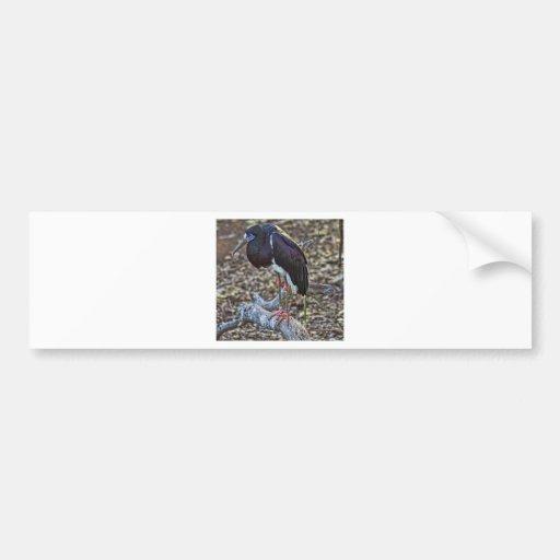 Abdim's Stork Bumper Stickers