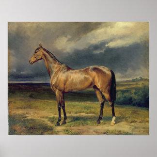 Abdul Medschid el caballo árabe de la castaña, 185 Póster