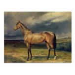 Abdul Medschid el caballo árabe de la castaña, 185 Postales