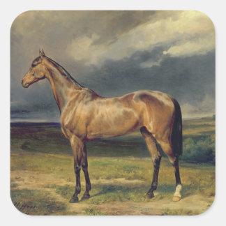 Abdul Medschid el caballo árabe de la castaña, Calcomanias Cuadradas