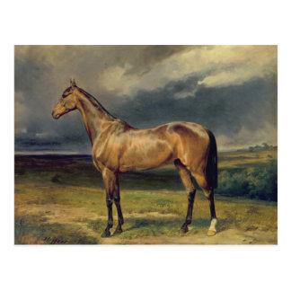 Abdul Medschid el caballo árabe de la castaña, Tarjetas Postales