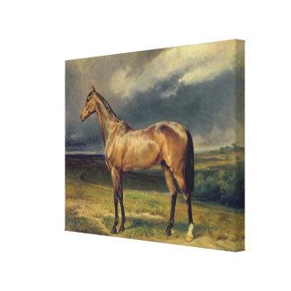 Abdul Medschid' the chestnut arab horse, 1855 Canvas Print