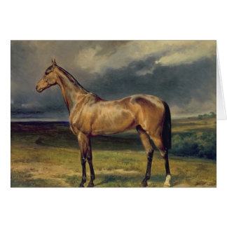 Abdul Medschid' the chestnut arab horse, 1855 Card