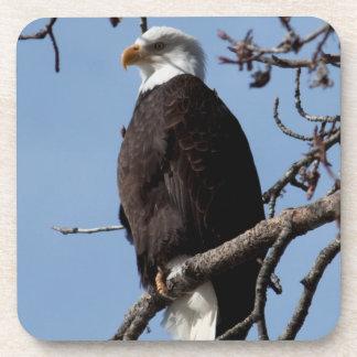 ABE Alaskan Bald Eagle Beverage Coaster